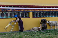 NEPAL Pokhara, tibetan refugee camp Prithvi, old tibetan handicapped woman circle around Stupa / NEPAL Pokhara, tibetisches Fluechtlingslager Prithivi, alte Tibeterin umrundet Stupa mit Gebetsmuehlen