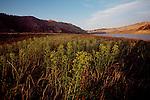 Upper Missouri River Breaks National Monument, Riverine landscape in spring, Montana, USA, North America,.