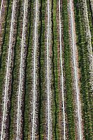Europe/Europe/France/Midi-Pyrénées/46/Lot/Parnac: Arbres fruitiers dans le méandre de la vallée du lot depuis le belvédère du  depuis  Col de Crayssac