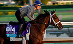 October 28, 2019 : Breeders' Cup Juvenile Turf entrant Our Country, trained by George Weaver, exercises in preparation for the Breeders' Cup World Championships at Santa Anita Park in Arcadia, California on October 28, 2019. John Voorhees/Eclipse Sportswire/Breeders' Cup/CSM