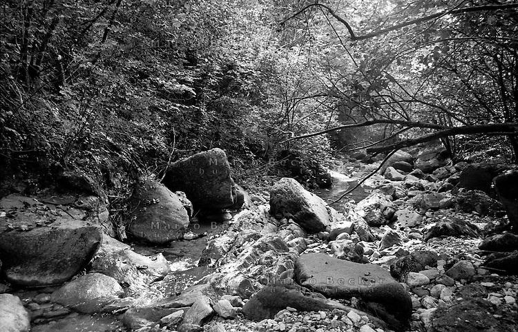 Ruscello presso Canzo (Como) --- Stream near Canzo (Como)