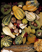 Interlitho-Alberto, STILL LIFE STILLEBEN, NATURALEZA MORTA, paintings+++++,pumpkins,KL16493,#i#, EVERYDAY ,autumn