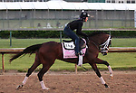 LOUISVILLE, KY - APRIL 27: Rachel's Valentina (Bernardini x Rachel Alexandra, by Medaglia d'Oro) gallops with her exercise rider Amy Mullen at Churchill Downs, Louisville KY, in preparation for the Kentucky Oaks.Owner Stonestreet Stables LLC, trainer Todd A. Pletcher.  (Photo by Mary M. Meek/Eclipse Sportswire/Getty Images)