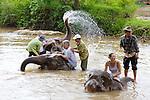 Group RWashing Elephants