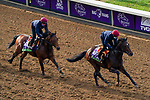 November 5, 2020: Order Of Australia, right, trained by trainer Aidan P. O'Brien, and Circus Maximus, trained by trainer Aidan P. O'Brien, exercise in preparation for the Breeders' Cup Mile at Keeneland Racetrack in Lexington, Kentucky on November 5, 2020. John Voorhees/Eclipse Sportswire/Breeders Cup/CSM