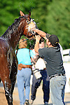 Baltimore, MD- May 17: 137th Preakness Contender Went The Day Well trained Graham Motion receives his morning bath during morning work outs  at Pimlico Race Course in Baltimore, MD on 05/17/12. (Ryan Lasek/ Eclipse Sportswire)