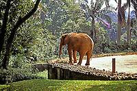 Elefante no Jardim Zoológico em São Paulo. 2000. Foto de Juca Martins.