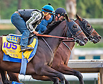 October 26, 2014:  Bayern, trained by Bob Baffert, exercises in preparation for the Breeders' Cup Classic at Santa Anita Race Course in Arcadia, California on October 26, 2014. Scott Serio/ESW/CSM