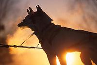 S Sidelinger's Dogs Sunrise Takotna 2000 Iditarod AK<br /> Mocha & Maxwell