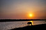 Asian elephant (Elephas maximus), Nagarhole National Park, Karnataka, India<br /> <br /> Canon EOS-3, EF70-200mm lens, Fujichrome Velvia film<br /> <br /> May 1999