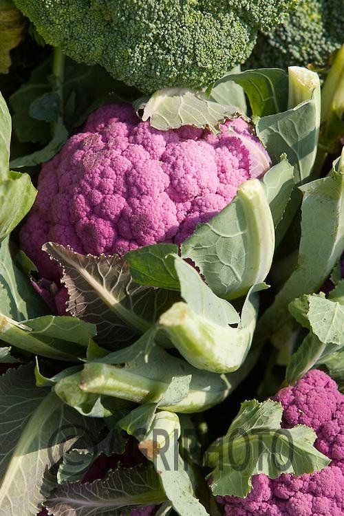 Cauliflower On A Stall At A Farmers Market In Devon