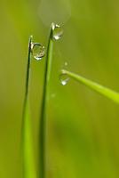 Dauw druppels in het gras