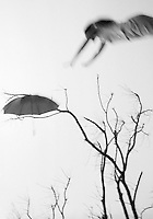 """From """"Dead tree game"""" series.<br /> Sabal Chase park, Kendall, Miami, FL"""