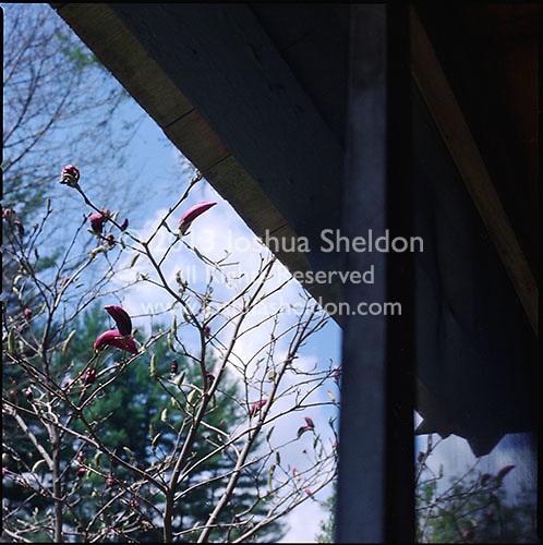 Budding flowers seen through screened porch window<br />