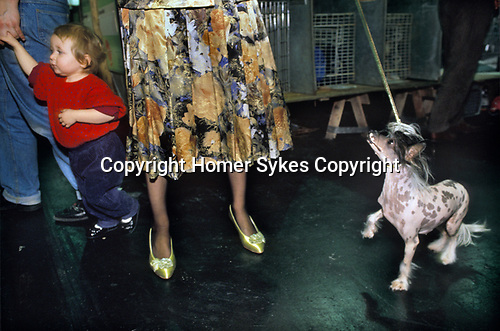 Solihull, Warwickshire. 1991<br /> At the annual Crufts dog show, Mrs Squires shows off  Belle Vue Lucy Locket, her Chinese Crested hairless spotted bitch