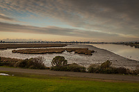 Oakland's Martin Luther King Jr. Regional Shoreline on Martin Luther KIng Day, 2020 at low tide.  It was a negative low tide that left much of San Leandro Bay an expanse of mudflats with feeding opportunities for multiple bird species.  On the distant horizon between clouds and wetland is the Oakland, California skyline.