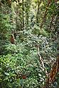 Lowland rainforest viewed from canopy platform, Masoala Peninsula National Park, north east Madagascar.