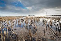 Waterlogged stubble in December - Lincolnshire
