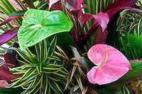 Tropical flower arrangement. Anthurium flowers and tropical foliage. Kauai, Hawaii