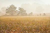Late summer fog, Cades Cove