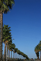 Palm tree lined road<br />