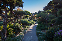 Carefully sculpted trees, bushes and shrubs line and shade the path at the Japanese Garden.