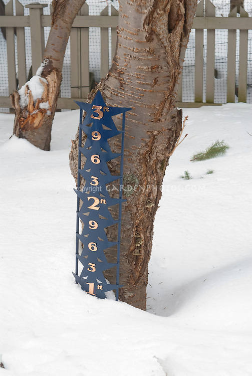 Winter Snow measuring with height measurement in the garden against cherry tree trunk and picket fence