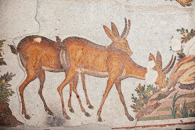 6th century Byzantine Roman mosaics of deer from the peristyle of the Great Palace from the reign of Emperor Justinian I. Istanbul, Turkey.