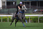 SHA TIN,HONG KONG-APRIL 29: Chautauqua,trained by Michael Hawkes,exercises in preparation for the Chairman's Sprint Prize at Sha Tin Racecourse on April 29,2016 in Sha Tin,New Territories,Hong Kong (Photo by Kaz Ishida/Eclipse Sportswire/Getty Images)
