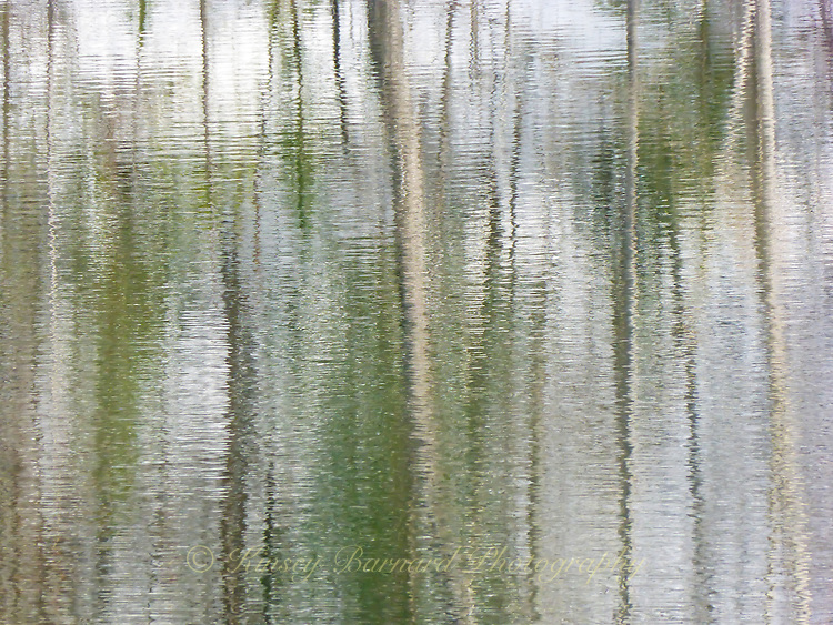 """""""MADISON RIVER REFLECTIONS""""<br /> <br /> Snags and tree trunk reflections on the waters of an eddy along the Madison River in Montana. Soft, subtle colors create a beautiful abstract landscape on these waters. ORIGINAL 24 X 36 GALLERY WRAPPED CANVAS SIGNED BY THE ARTIST $2,500. CONTACT FOR AVAILABILITY."""