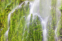 Seasonal waterfall into Tanner Creek.Columbia River Gorge National Scenic Area, Oregon