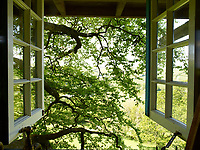 View of the leafy canopy of the beech tree through the double window of the treehouse