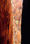 A sunlit gum or eucalyptus tree is centrally placed between the dark walls of a narrow gorge, Northern Territory, Australia.