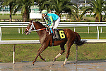 NEW ORLEANS, LA - JANUARY 21:<br />   Hawaakom #6 ridden by Miguel Mena wins the Louisiana Stakes at the Fairgrounds Race Course on January 21,2017  in New Orleans, Louisiana. (Photo by Steve Dalmado/Eclipse Sportswire/Getty Images)
