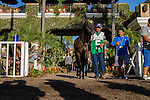 AUG 30,2014:Sunset Glow,ridden by Victor Espinoza,wins the Del Mar Debutante at Del Mar in Del Mar,CA. Kazushi Ishida/ESW/CSM