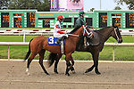 January 16, 2016: Zeven with Corey J. Lanerie up in the Marie G. Krantz Memorial Stakes race at the Fairground race course in New Orleans Louisiana. Steve Dalmado/ESW/CSM