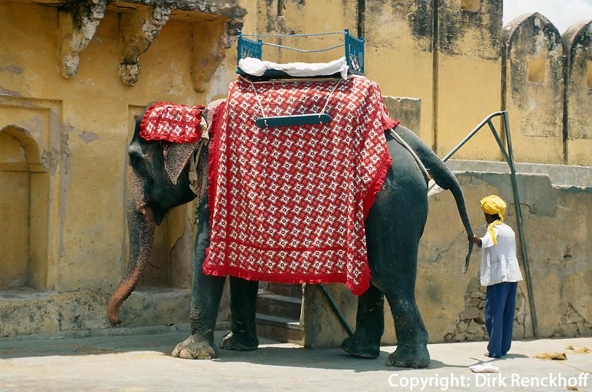 Indien, bei Jaipur (Rajasthan), Elefant im Fort Amber