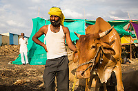 A farmer stands with his cow in the drought-hit region of Latur, Maharashtra, western India.
