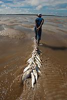 Pescadores artesanais preparam as fieiras com os peixes capturados para transporta-los até o barco, após um dia de trabalho. A pesca realizada na Reserva Extrativista Marinha Mãe Grande no litoral do Pará, na foz do rio Amazonas, rende aos pescadores por dia cerca de 200 quilos de pescado de várias espécies como: piramutabas, sardinhas, filhotes, pescada amarela, robalo e tainhas.<br /> Curuçá, Pará, Brasil.<br />  Foto: Paulo Santos <br /> 20/05/2009
