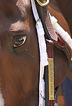 Rachel Alexandra makes her way to the Churchill Downs paddock for the 36th running of The Fleur De Lis Handicap(grII). 06.12.2010