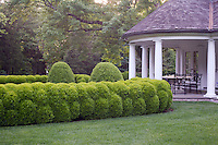 A sculpted boxwood hedge encloses a part of the garden in front of the pavilion
