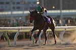 SHINAGAWA,JAPAN-JANUARY 25: One Millionth #7,ridden by Keita Tosaki,wins the TCK Jo-o Hai at Ohi Racecourse on January 25,2017 in Shinagawa,Tokyo,Japan (Photo by Kaz Ishida/Eclipse Sportswire/Getty Images)