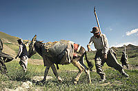 A group of men using a donkey to transport aggregate. They are working for a cash-for-work scheme, a short-term intervention used by humanitarian assistance organisations to provide temporary employment in public projects, such as repairing roads, clearing debris or re-building infrastructure.