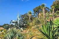 Le Domaine du Rayol:<br /> le jardin d'Amérique aride dominé par les Yucca rostrata , également, Dasylirion, agaves et cactées.