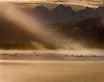 """""""Bald Eagles Landscape"""", Alaska"""