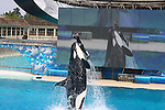 WHALE LIFTS up MAN at Sea World