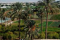 GERICO / ISRAELE.PALME DA DATTERI E COLTIVAZIONI DI ORTAGGI..GERICO, SPLENDIDA OASI NEL DESERTO DI GIUDA, E' FAMOSA FIN DALL'ANTICHITA' PER I SUOI PRODOTTI AGRICOLI..FOTO LIVIO SENIGALLIESI..JERICHO / ISRAEL.Jericho's moderate climate makes it a favorite winter resort. It is an important agricultural area, producing fresh fruits and vegetables year round. Jericho dates, bananas and citrus fruits are especially famous..Photo Livio Senigalliesi.
