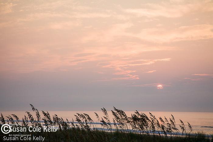 Beach sunrise with Sea oats, Huntington Beach State Park, SC, USA
