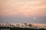 Beach sunrise with Sea oats, Huntington Beach State Park, SC, USA