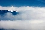 DEU, Deutschland, Bayern, Niederbayern, Nationalpark Bayerischer Wald, Herbstlandschaft, Nebel   DEU, Germany, Bavaria, Lower-Bavaria, National Park Bavarian Forest, autumn landscape, fog